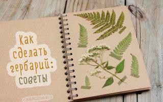 Лето под прессом. как собирать и сушить растения для гербария - хобби