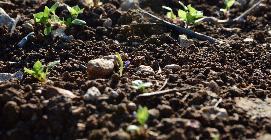 Что такое почва? виды и свойства почв :: syl.ru