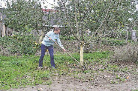 Осенняя подкормка плодовых деревьев и кустарников: удобрение яблонь, груш, вишни, сливы, смородины, малины, крыжовника осенью - почва.нет
