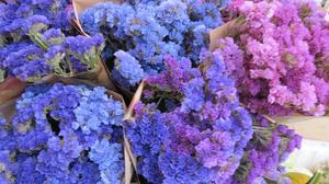 Популярные растения сухоцветы: фото и названия — топ 10