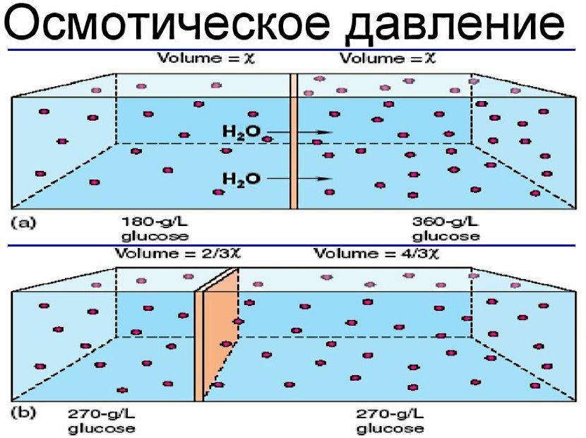 Осмос для очистки воды: что это такое и понятие обратной и прямой фильтрации, рейтинг обратноосмотических фильтров и место в нём системы atoll, особенности осмотической водоочистки