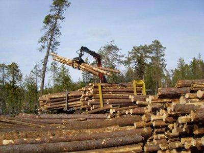 как получить лес от государства
