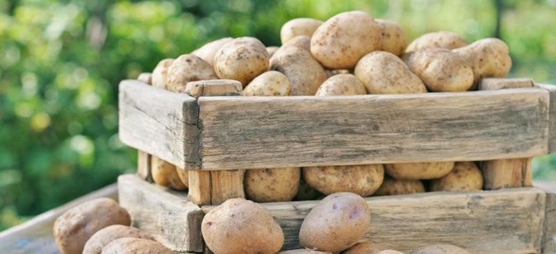 Хранение картофеля в погребе гаража зимой: при какой температуре хранить картошку