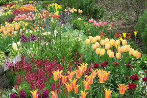Лучшие луковичные цветы-многолетники для сада - подборка сортов