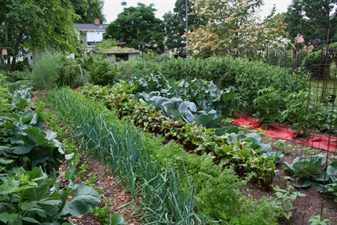 План огорода: планирование грядок, их описание и схема
