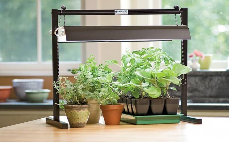 фиолетовая лампа для растений
