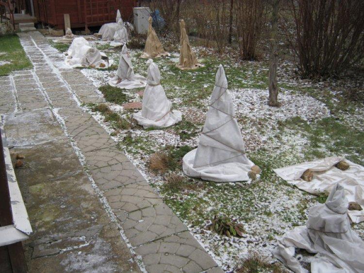 Укрывают ли на зиму многолетние цветы, когда и как это делать | сад и огород