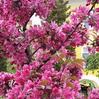 Полезные и актуальные советы дачникам и огородникам
