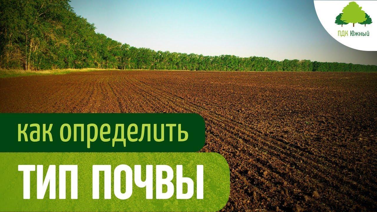 Песчаная почва: что это такое? ее характеристика. какие почвы формируются на песках? как улучшить почву на участке? чем ее удобрить, чтобы сделать плодородней?