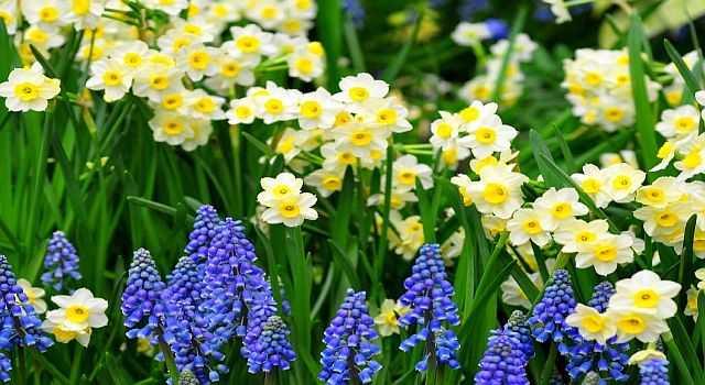 многолетние цветы фото и названия
