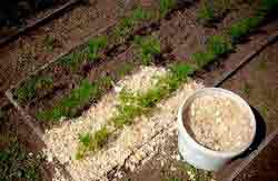 Мульчирование почвы — что это такое и как правильно им заниматься?