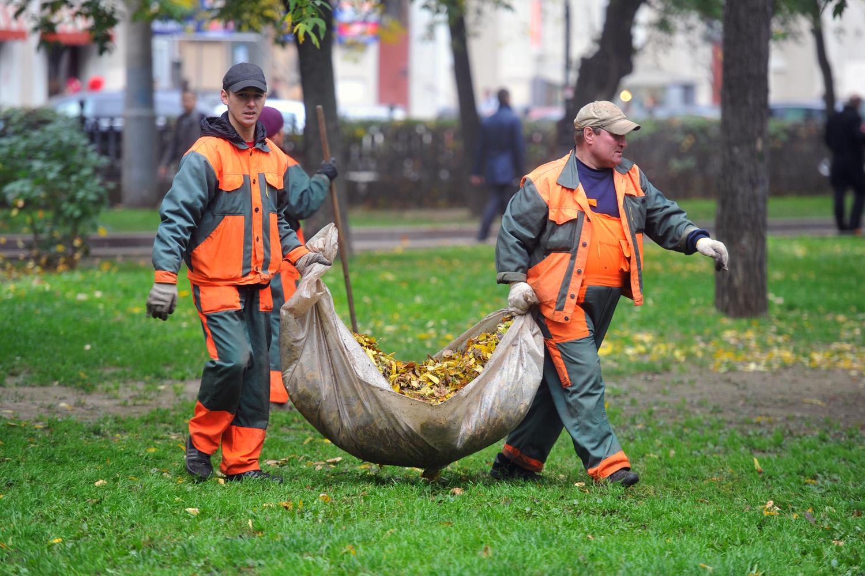 Нужно ли собирать опавшие листья в саду / асиенда.ру