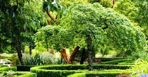 Как быстро озеленить деревьями участок. какие деревья быстро растут?
