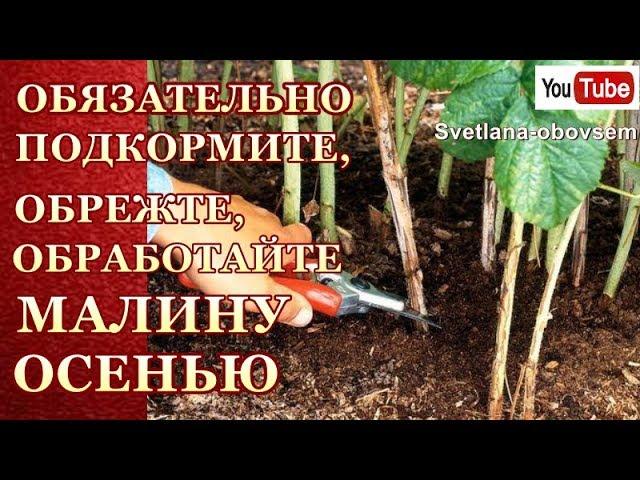 Чем удобрять малину осенью для улучшения урожая на следующий год