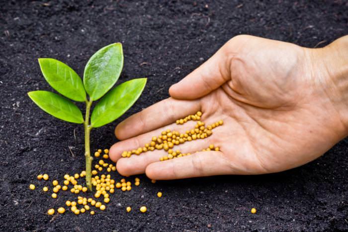 калий для растений