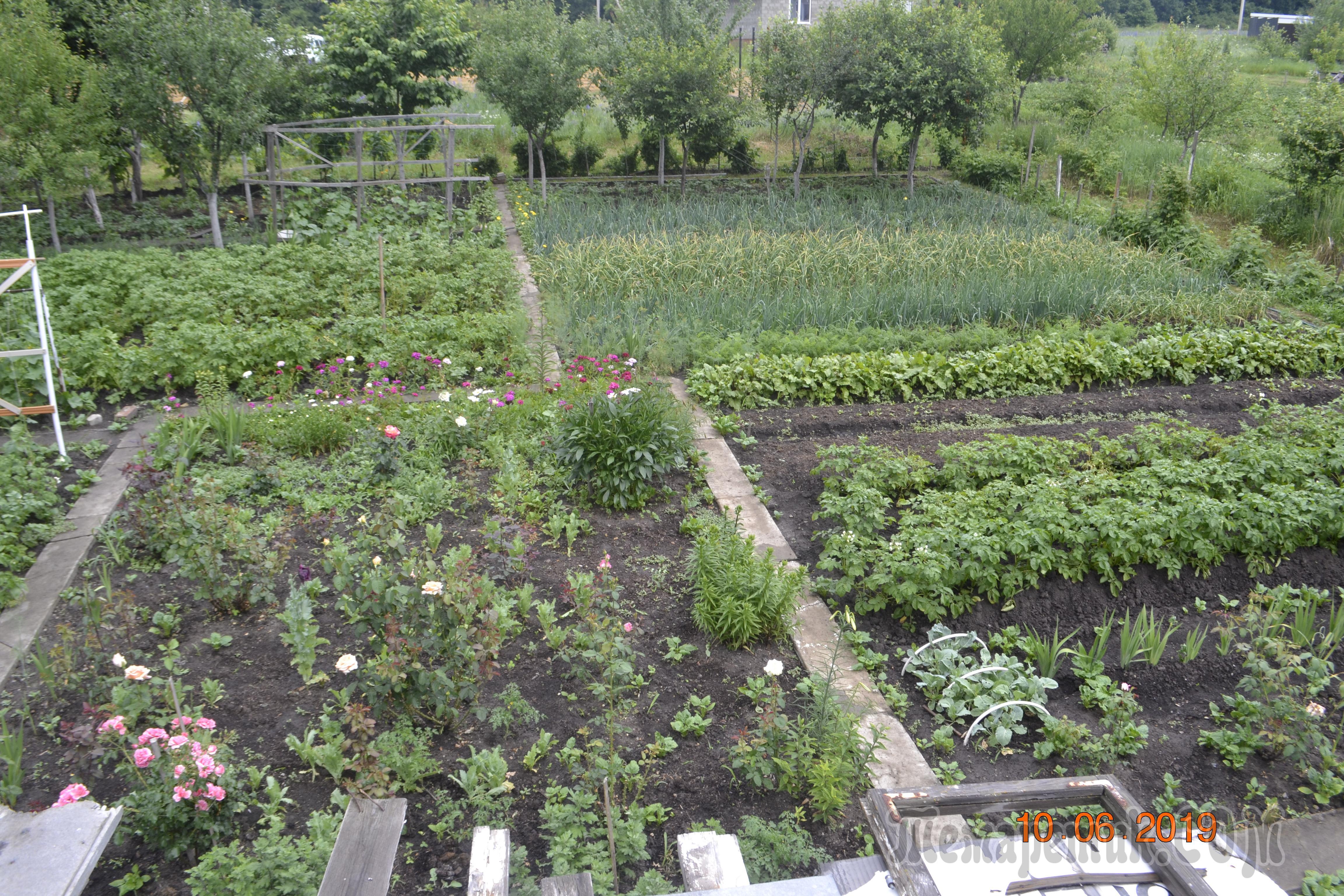 Органическое земледелие (экоземледелие) 5 главных правил | сайт о саде, даче и комнатных растениях.