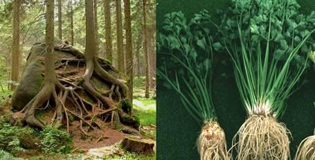 Анатомическое строение корня | student guru