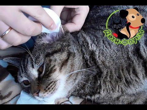 как избавиться от кота