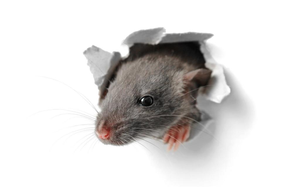 Как выбрать утеплитель который не грызут мыши