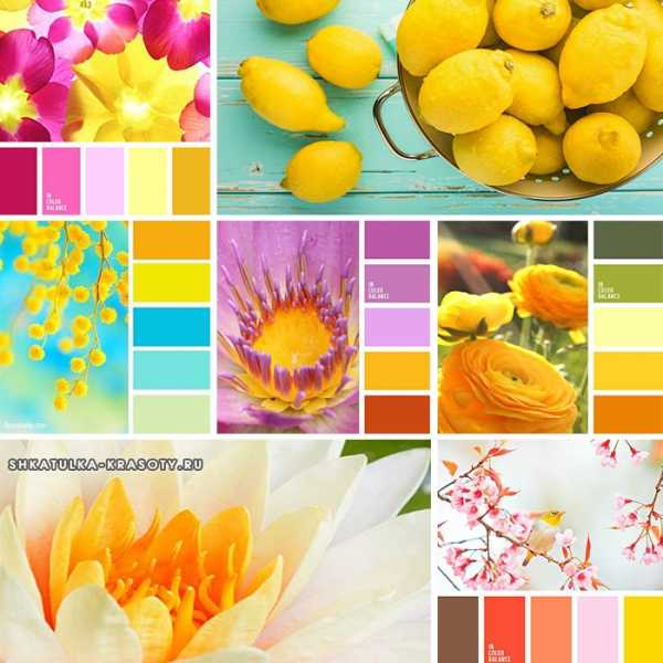 лучшие сочетания цветов