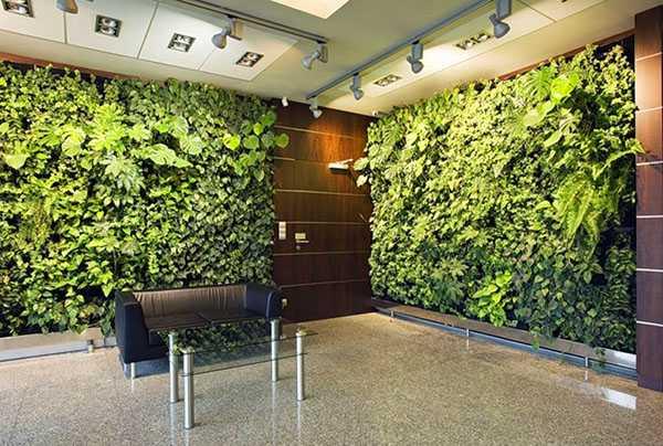 Вертикальный сад +100 фото в квартире, офисе, участке своими руками