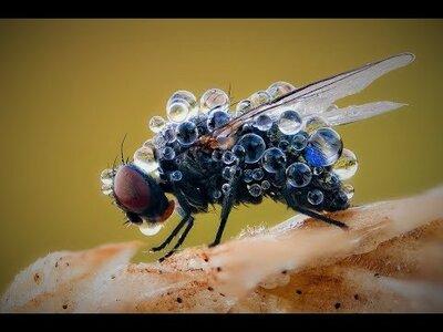 откуда мухи в деревянном доме