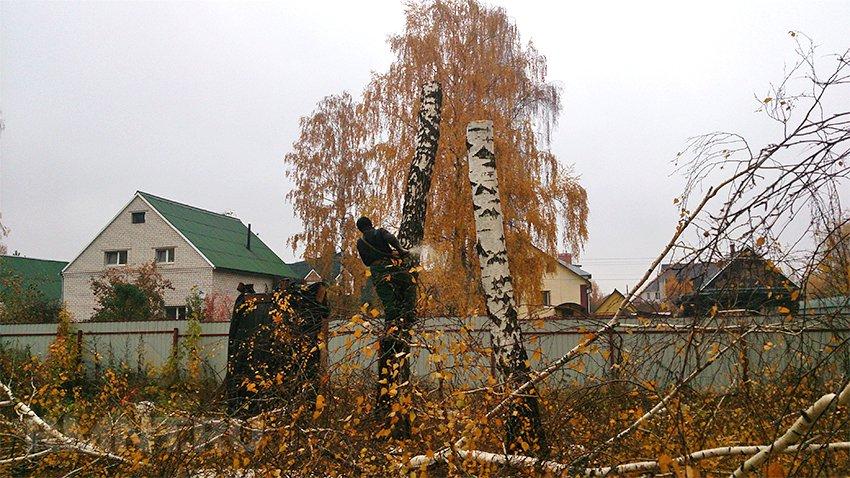 На страже закона: куда жаловаться, если дерево спилили без разрешения?