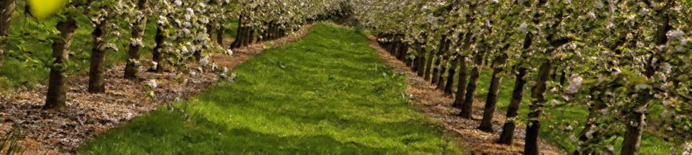На каком расстоянии сажать лук: какое расстояние соблюдать при посеве