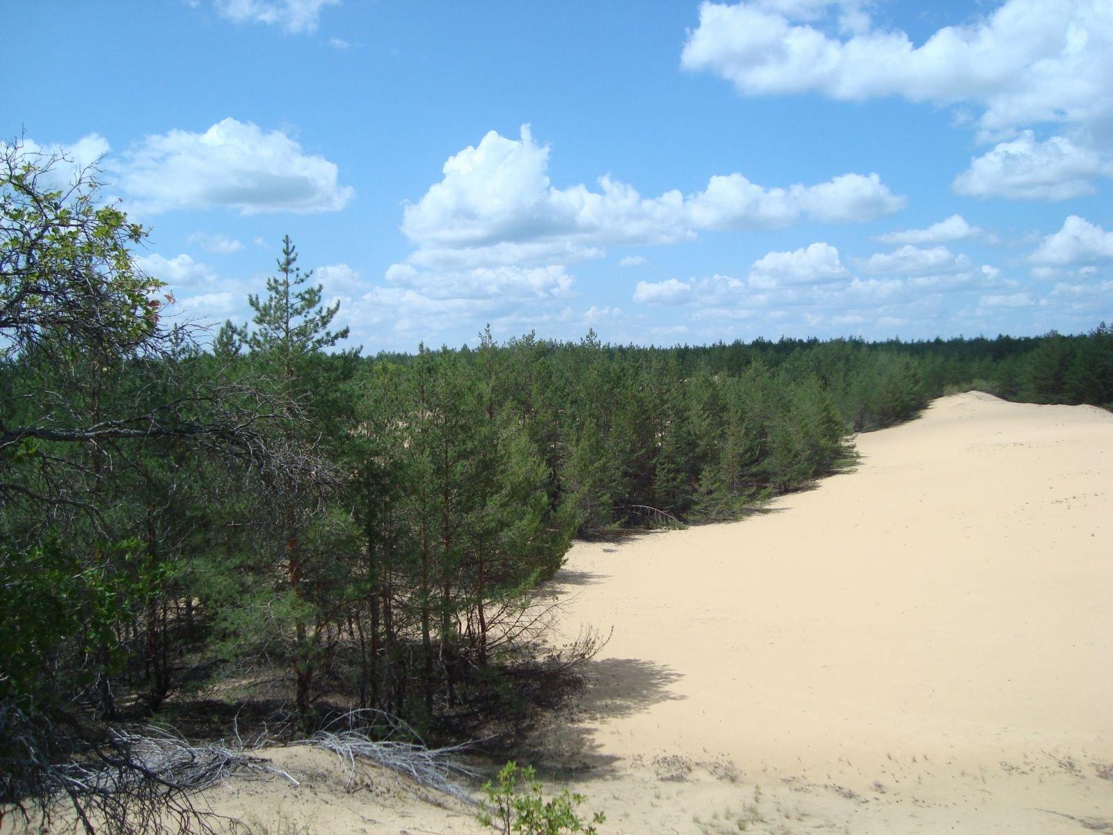 А вы знали, что каждому россиянину по закону полагается 150 кубов леса беcплатно?. обсуждение на liveinternet
