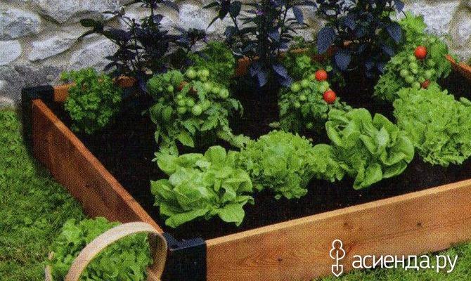 Советы огородникам, садоводам, дачникам: для начинающих и опытных