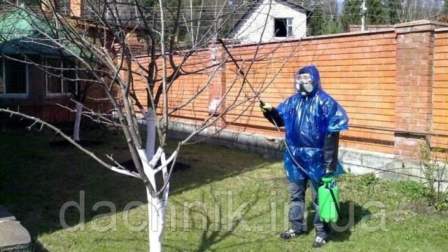 когда опрыскивать плодовые деревья