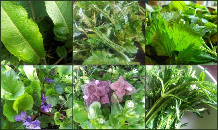 Овощи для детей на даче: что посадить? 7 идей. овощи на даче. грядки для детей