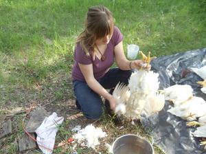 Как ощипать курицу в домашних условиях: быстрый и правильный способ, фото