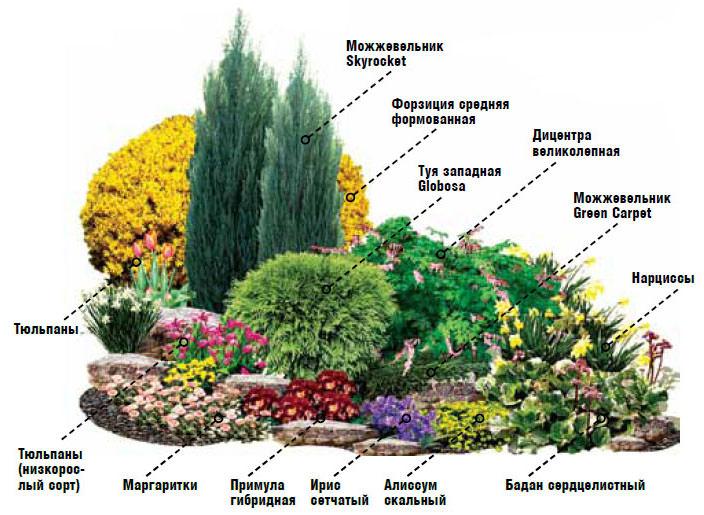 почвопокровные растения многолетники фото и названия