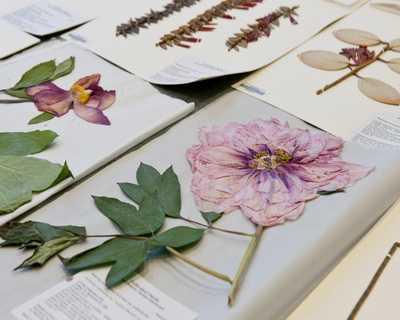 Как красиво сделать и оформить гербарий из листьев