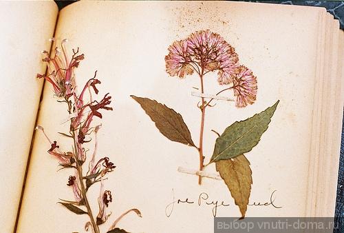 гербарий из листьев фото