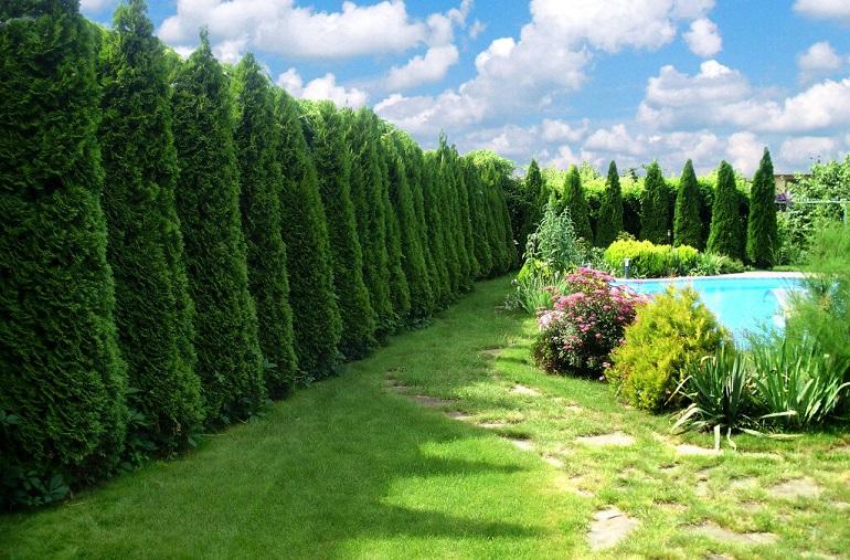 какое дерево растет быстрее всех в россии
