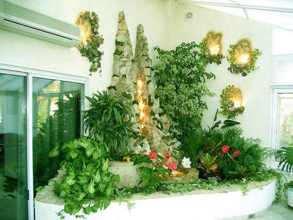 Вьющиеся комнатные растения и свисающие лианы - pocvetam.ru