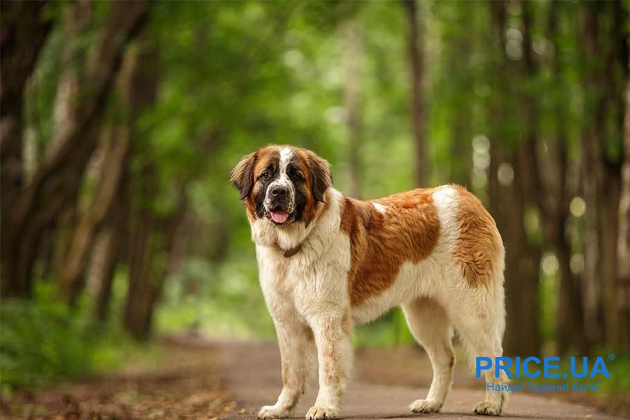 собака для частного дома