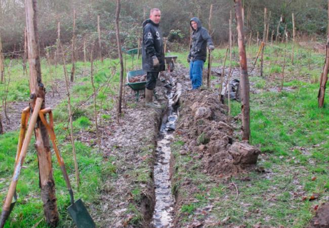 при какой температуре закрывать виноград на зиму