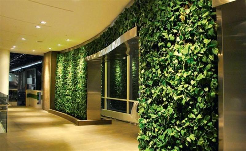 Вертикальный сад в квартире — те же живые стены из растений