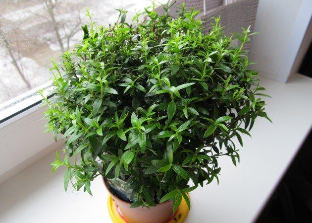 Какие 10 комнатных растений приносят счастье, любовь и благополучие