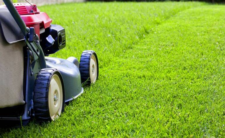 Правила посадки и выращивания клевера на газоне