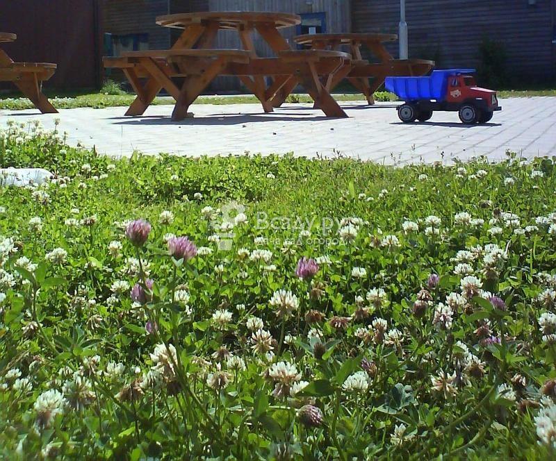 Обустройства газона из клевера: преимущества и недостатки