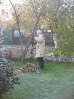 Что делать с опавшей листвой осенью на участке