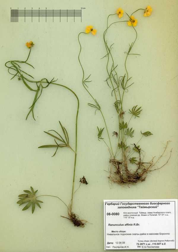Как оформить гербарий в школу? | активная мама