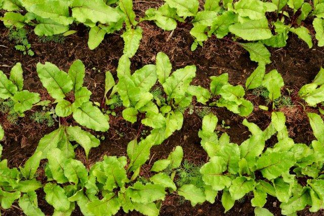 Правила выращивание шампиньонов в домашних условиях для новичков с нуля