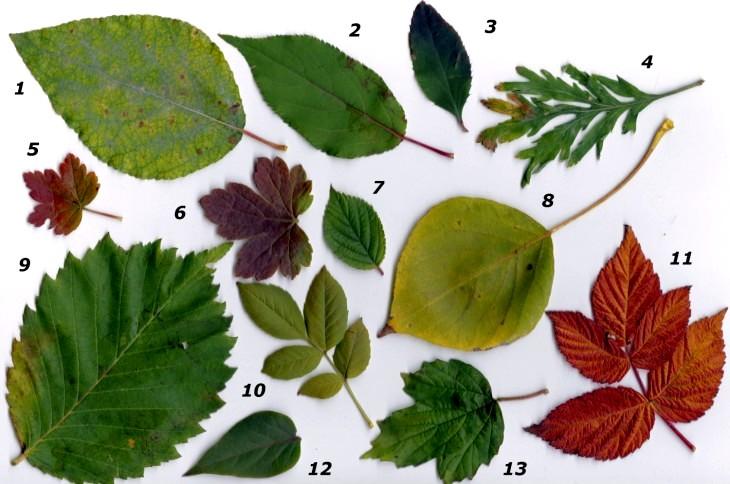Новые осенние поделки из листьев — для детского сада и школы