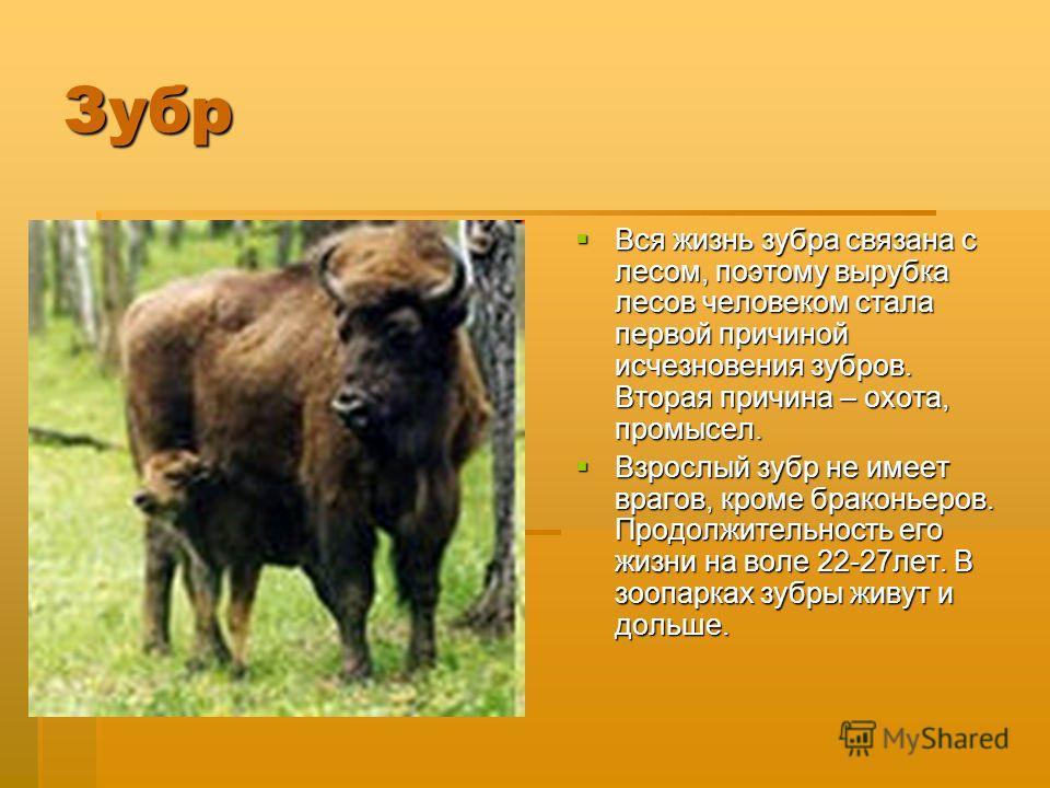 зубр овк