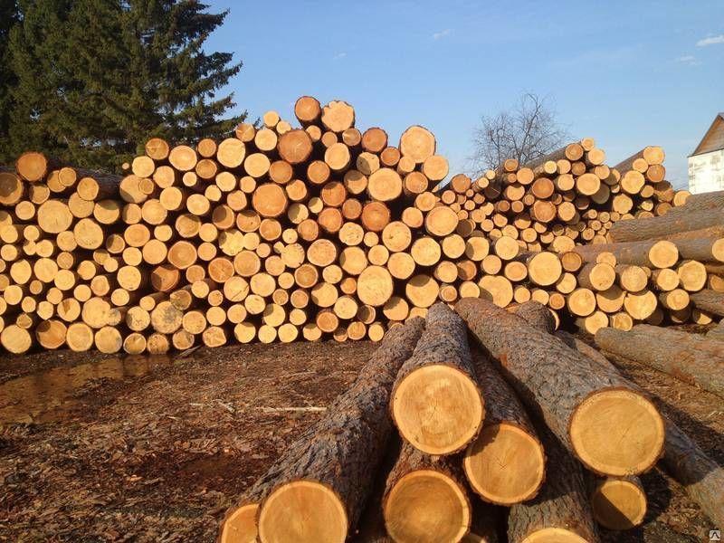 как получить лес от государства бесплатно